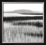 Nut Island, Salt Marsh Prints by Dorothy Kerper Monnelly