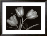 Tulips Prints by Jan Schou