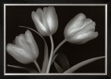 Tulips Poster by Jan Schou