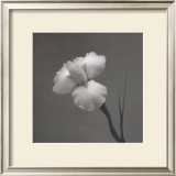 Iris II Print by Tom Artin