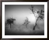 Baume im Nebel II Art by Tom Weber