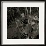 Mare, c.2004 Framed Giclee Print by Jacky Lecouturier