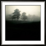 Fog Tree Study II Prints by Jamie Cook