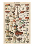Mushrooms Larousse 1913 Giclee Print