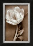 Tulip Posters by Christine Zalewski