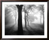 Baume im Nebel I Posters by Tom Weber
