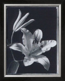 Iris Prints by Augusto Camino
