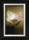 Tulip I Prints by Chris Sands