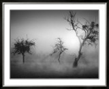 Baume im Nebel II Prints by Tom Weber