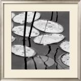 Lily Pads, Sunrise Prints by David Gray