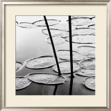 Lily Pads, Dusk Print by David Gray
