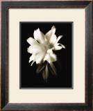 Portrait in White I Prints by John Rehner
