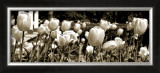 Tulips in the Breeze I Prints by Alicia Soave