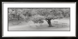 Lakeside Park Prints by Gomes