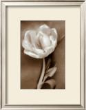 Tulip Print by Christine Zalewski