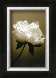Peony I Prints by Chris Sands