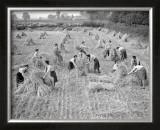 Women at War: On the Land Prints