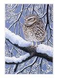 Little Owl (Athene Noctua) Giclee Print by Robert Gillmor
