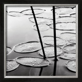 Lily Pads, Dusk Posters by David Gray