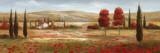 Tuscan Poppies II Posters af Nan