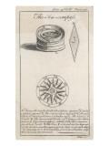 Sea Compass Giclee Print
