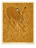 Stubble Hare Giclee Print by Robert Gillmor