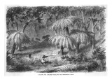 Scene in the Bush - Hunting the Lyre Bird Giclee Print