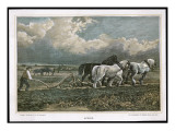 Spring, Ploughing the Field with Three Shire Horses Giclee Print