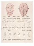 The Chinese System of Physiology - How Your Facial Characteristics Reveal Your Character Giclee Print