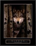 Wisdom: Gray Wolf Prints