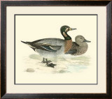 Morris Ducks III Print by Reverend Francis O. Morris
