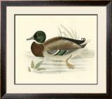 Morris Ducks I Poster by Reverend Francis O. Morris