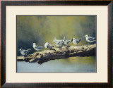 Out on a Limb, White Winged Terns Posters by Dino Paravano