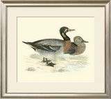Morris Ducks III Posters by Reverend Francis O. Morris