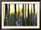 The Forest at Dawn Print by Marvin Pelkey