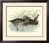 Morris Ducks II Prints by Reverend Francis O. Morris