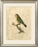 Selby Birds II Prints by Prideaux John Selby