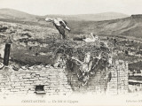 Stork Nesting on a Rooftop, Constantine, Algeria Photographic Print