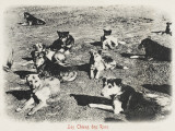 Street Dogs - Constantinople, Turkey Photographic Print
