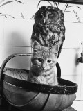 The Owl and the Pussycat Have Fun in a Basket Together! Photographic Print
