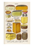 Various Cheeses in Household Management Book Giclee Print