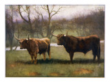 Two Highland Cattle in the North of Scotland Giclee Print