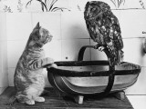 The Owl and the Pussycat: 'Wake Up, Aren't You Even a Bit Scared of Me, Owl' Photographic Print