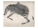 Zebra Skin Giclee Print