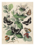 Various Butterflies on Leaves and Berries Giclee Print