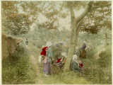 Women Picking Tea in Uji Near Kyoto, Japan Photographic Print by Pump Park