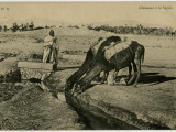 At La Segnia,(Probably in Algeria) Two Camels Kneel to Drink from an Irrigation Trench Photographic Print