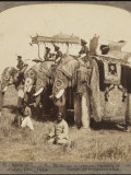 State Elephants of the Maharajah of Gwalior Superbly Decorated for the Delhi Durbar Photographic Print