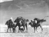 Two Camels and a Horse, Kashgar, Western China Photographic Print