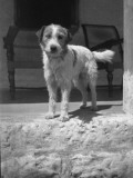 A Little Terrier in India Photographic Print by Vanessa Wagstaff